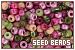 Beads: Seed